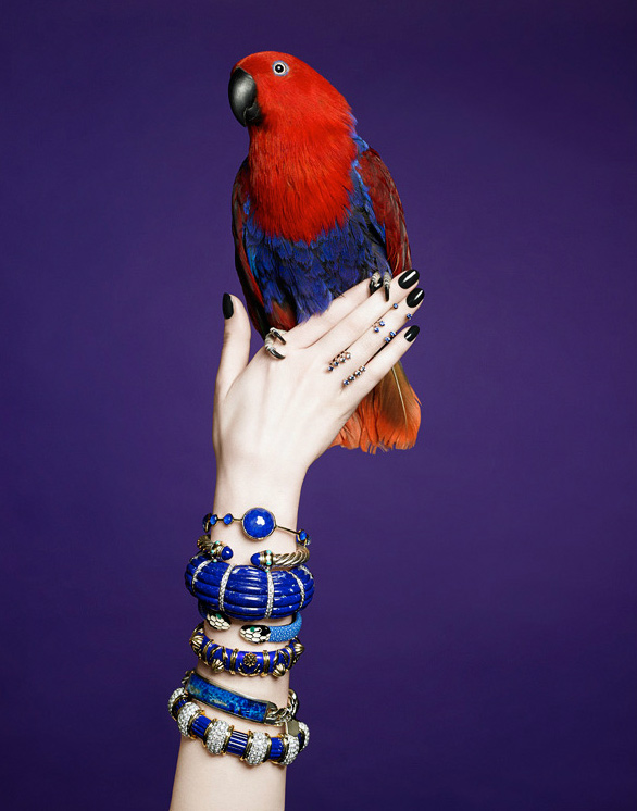 Parrot on a Hand
